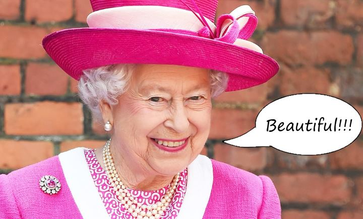 Force India rose, reine Elizabeth