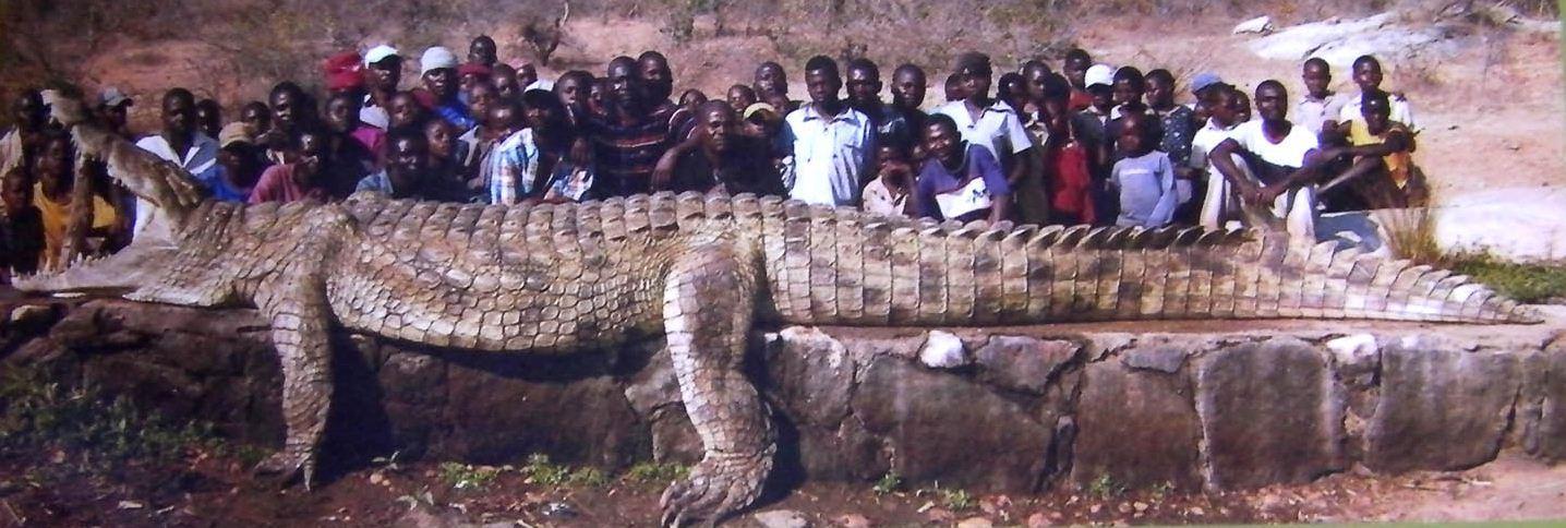 Pourquoi les sauriens rampent ils for Peinture crocodile