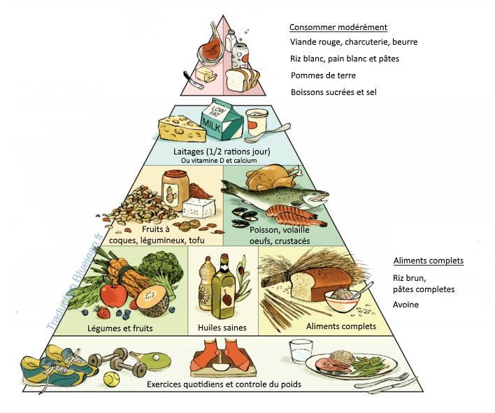 Pyramide alimentaire de Harvard pour une meilleure santé