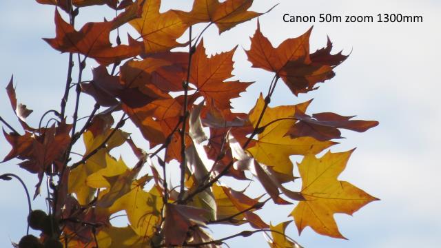 Canon 60x à 50 mètres